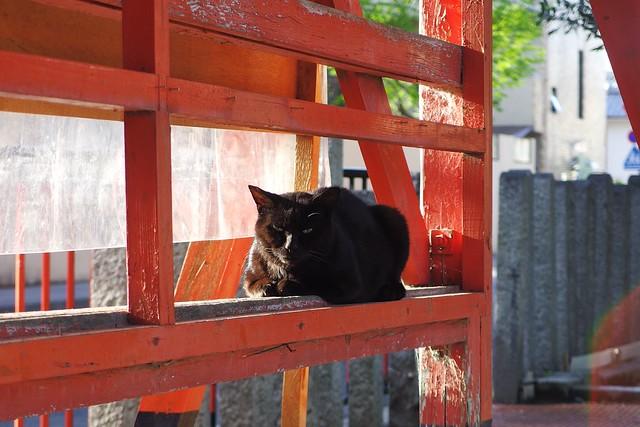 Today's Cat@2018-04-19