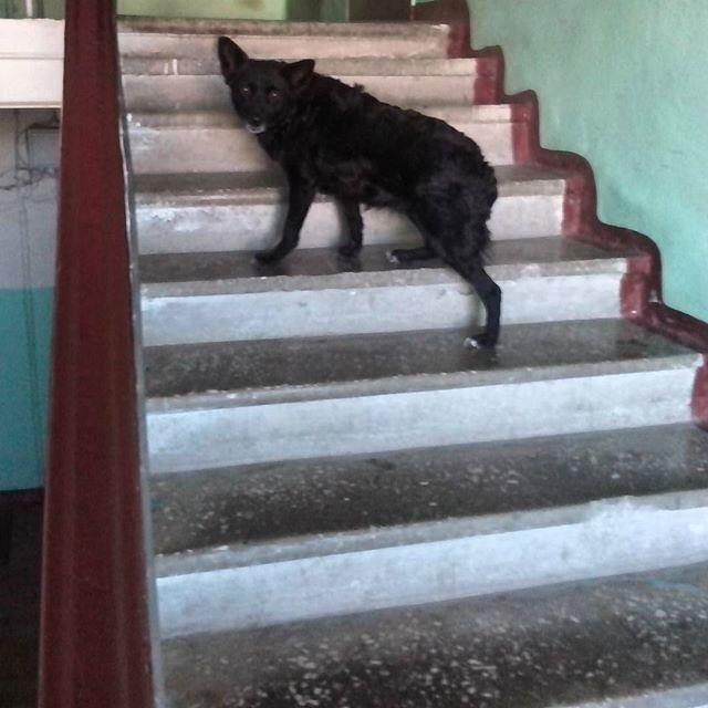 Zhuzha_nextdoor_dog