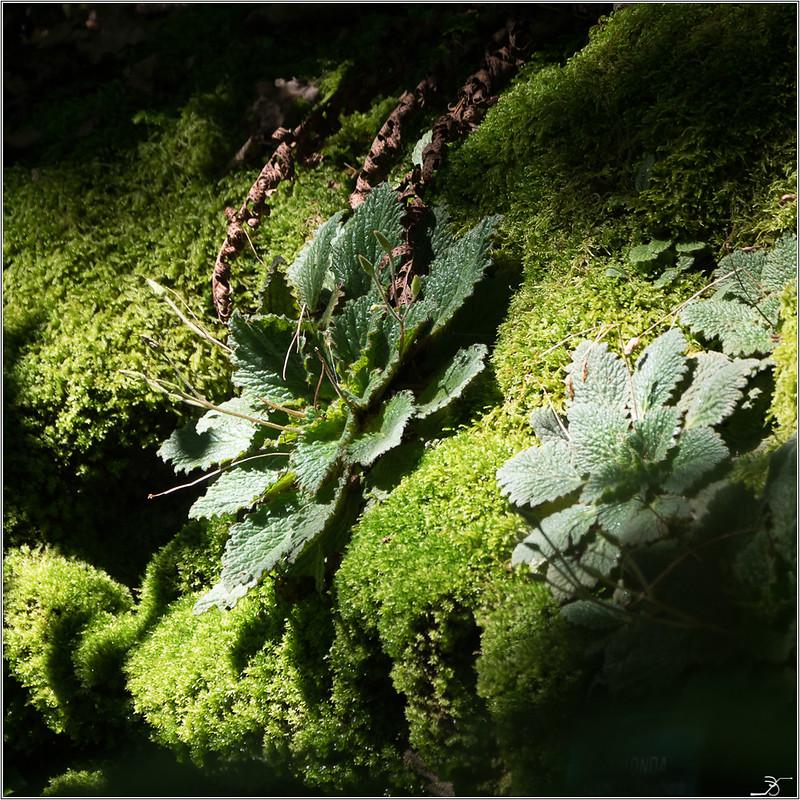 Jardin botanique Saverne: Rampants et fleurs 42185812165_debf1b1669_c