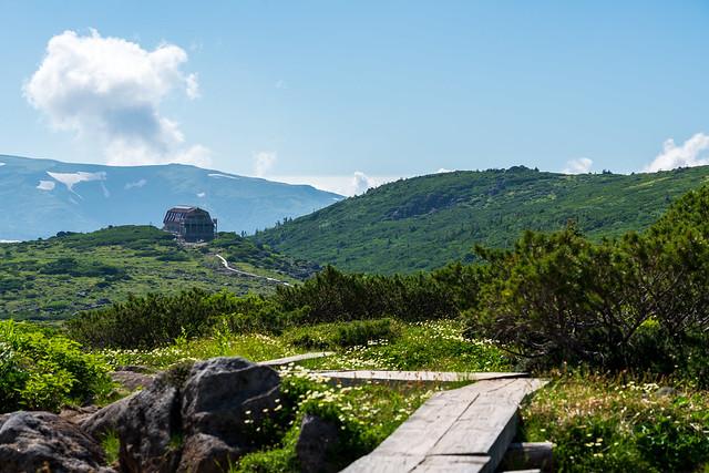 木道際のチングルマの先に雲ノ平山荘