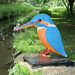 Kate the Kingfisher