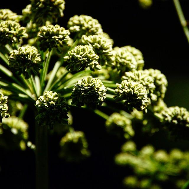 Architetture vegetali, Nikon D40, AF-S DX Zoom-Nikkor 55-200mm f/4-5.6G ED