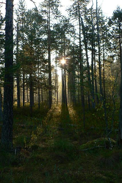 краски осени восход
