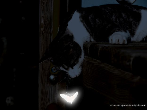 dixi-mariposa-i-noche-flickr