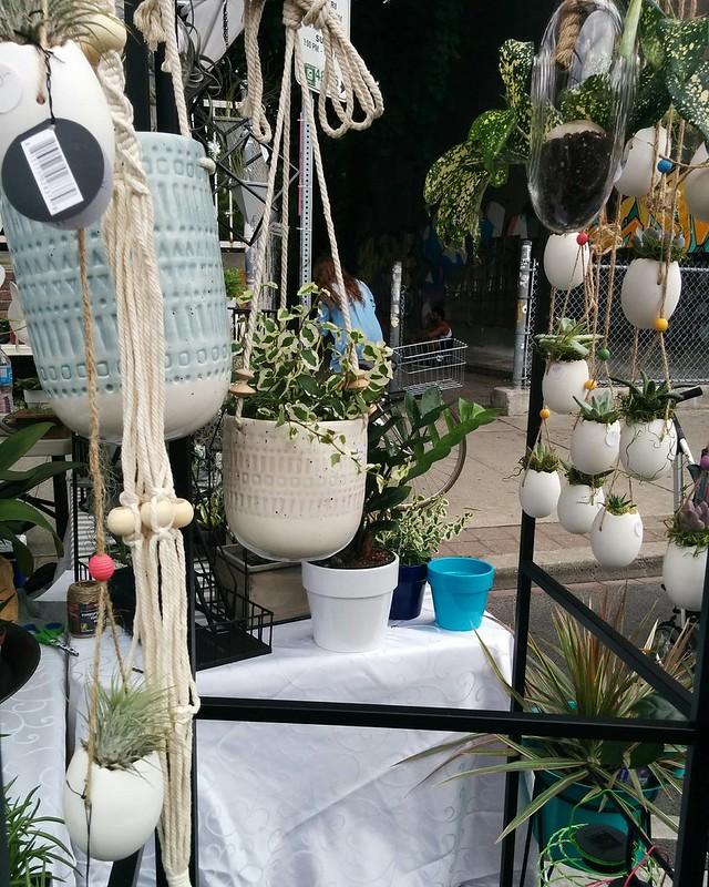 Hanging plants #toronto #bloordale #bloorstreetwest #bigonbloor #streetfestival #plants #latergram