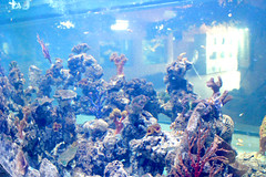 Fish Aquarium in Srisaket , Thailand