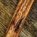 Bracken Map - Rhopographus filicinus