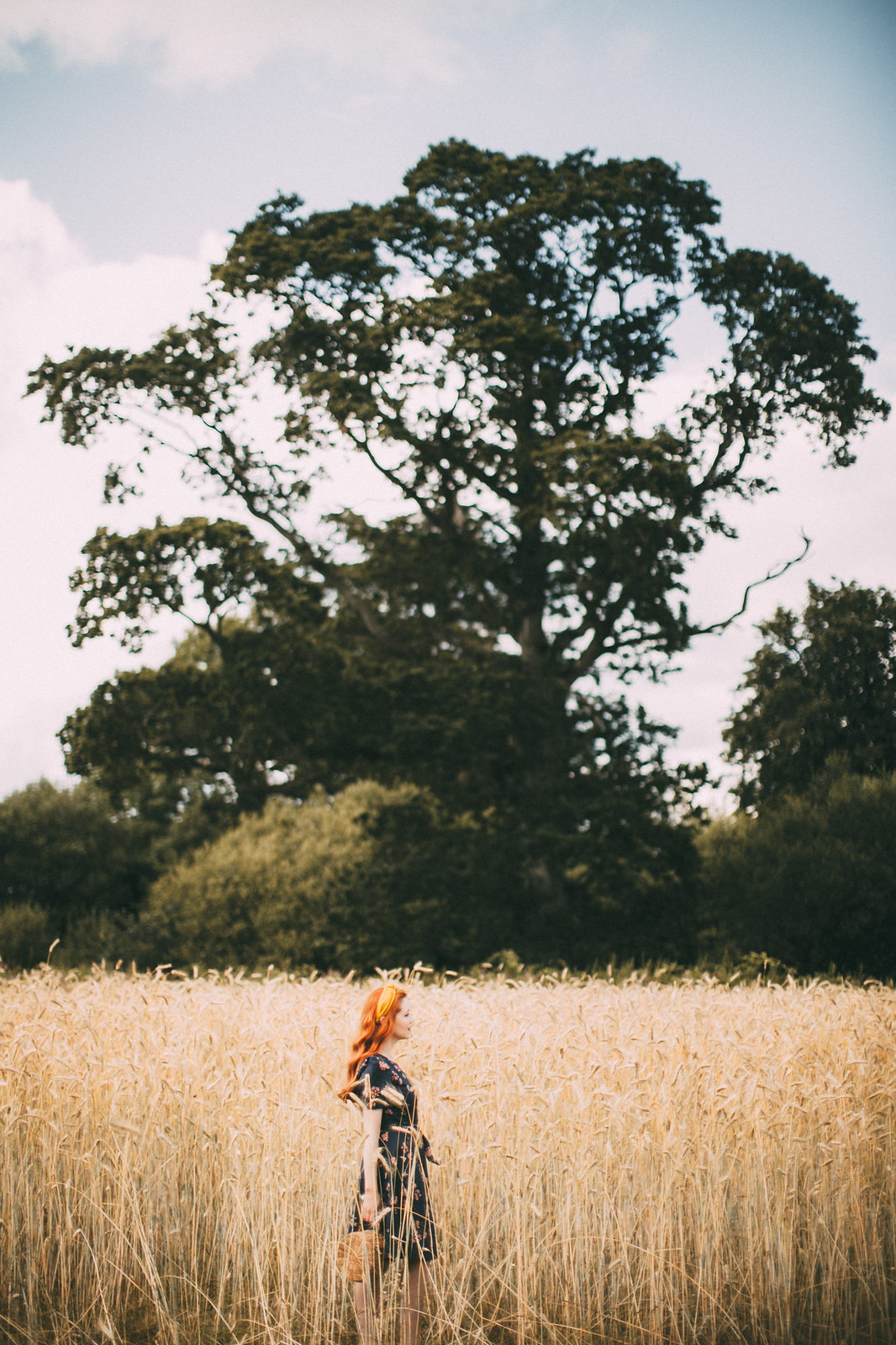 wheat shoot-17