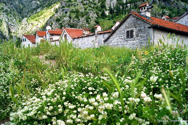 Пейзаж с верхней части крепостных стен Котора