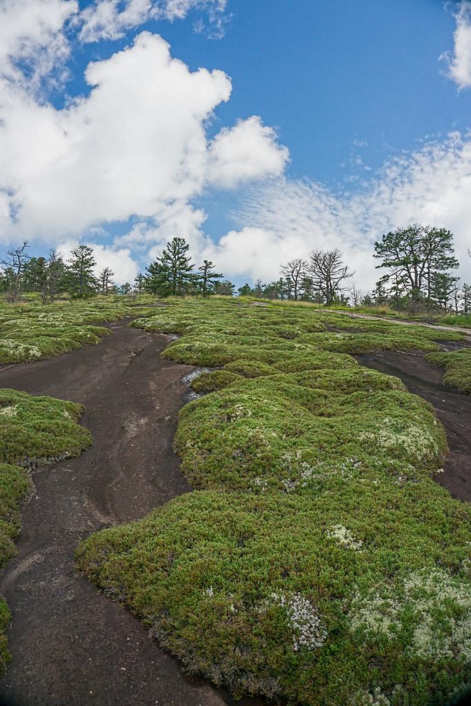 Up the hill (Cedar Mt)