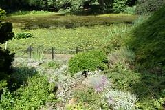 Clark Botanic Gardens (27)