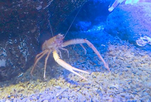 エビ 深海水族館
