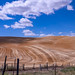 Harvest time in the Palouse.