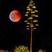 Eclipse en el cabezo laJoya by pericoterrades