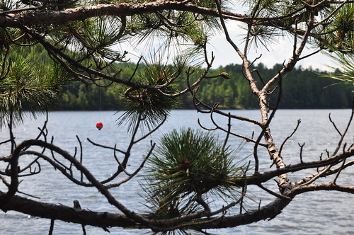 Someone tried fishing too close to the trees