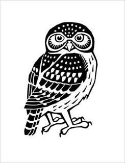 Pigmy Owl / Воробьиный сыч