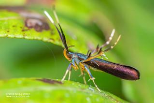 Moth - DSC_7457