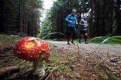 Jizerská v létě, to jsou hlavně pohodové trasy na 12 a 23 kilometrů