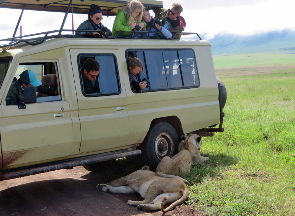 lions-shade-safari-vehicle