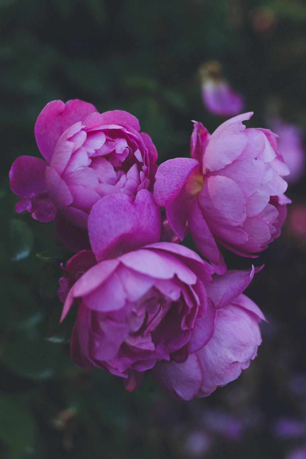 Kisiel-2018-06-23-086