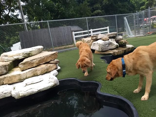 07/22/18 Group Swim! :)