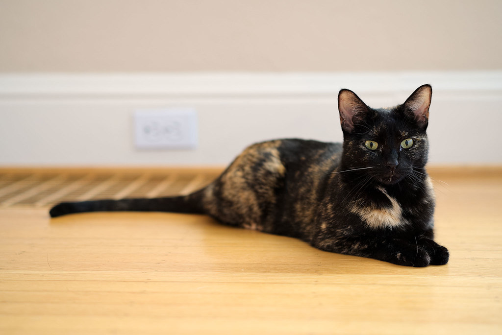 Our tortoiseshell cat Trixie relaxes near the heating vent of our home in Portland as I play around with the shallow depth of field possible with Sony's 55mm f/1.8 lens
