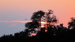 Sunset C-17