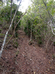 illegal-trail-cut_43259524552_o