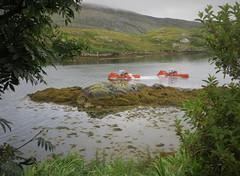 seaweed munchers passing glas sgeir...