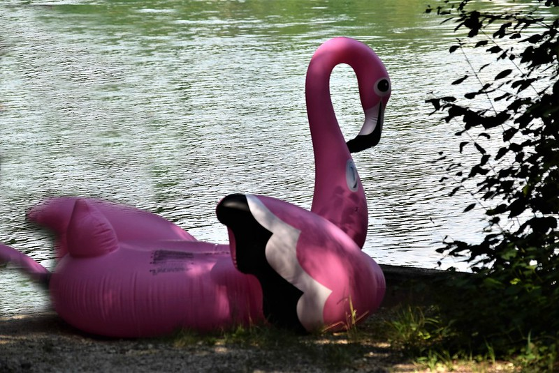 Pink floating flamingo