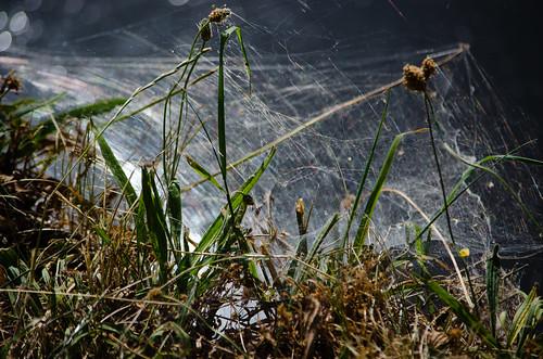 Canalside cobweb