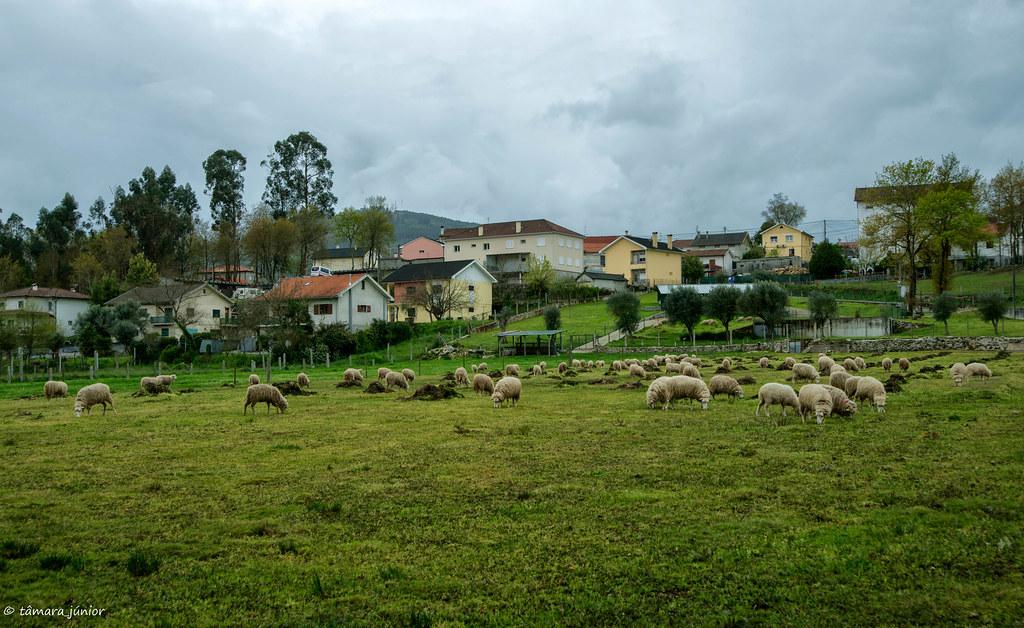 2018.- Ecovia do Vez (Sistelo-Arcos) (567)