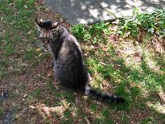 IMG_20180722_114116846 cat in Fanjeaux, Aude, Occitanie, France : 21 Jul 2018