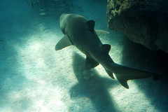 Shark feed at Two Ocean Aquarium, Cape Town, South Africa