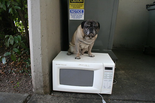 Danville Microwave Repair Pug and White Microwave Oven