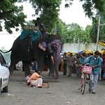 The elephant and his mahout