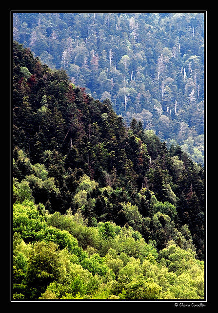 Flickr photo sharing - Gama de verdes ...
