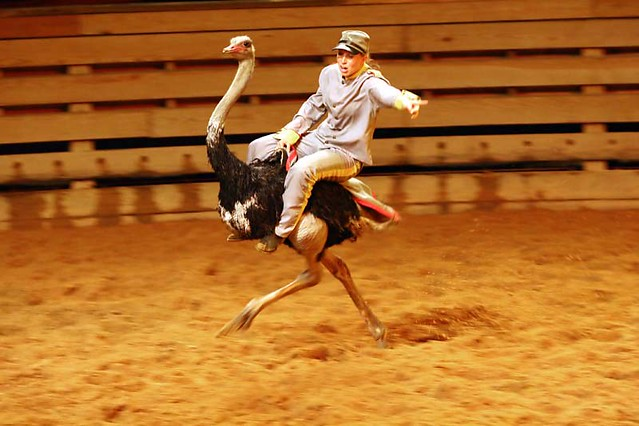 Dixie Stampede A Gallery On Flickr