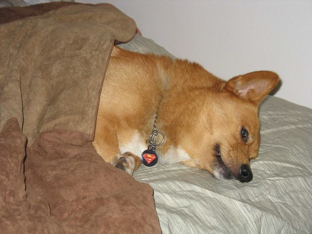 Sampson sleepin in my spot!