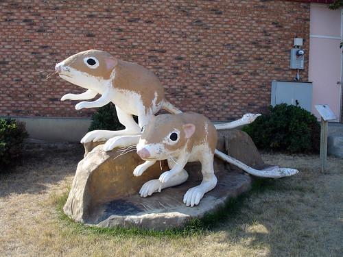 Ord's Kangaroo Rats