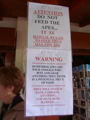 Do Not Feed the Apes