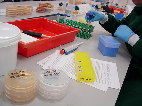 Biology 253 Lab