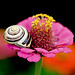 the snail princess ascended to the throne by Rosina
