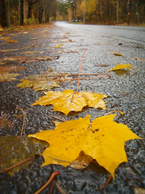 HPIM13807. Autumn leaves