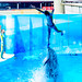 It's amazing jump!!! At the Dolphins and Sea Lions Show of Enoshima Aquarium : イルカとアシカのショー(藤沢市・新江ノ島水族館)