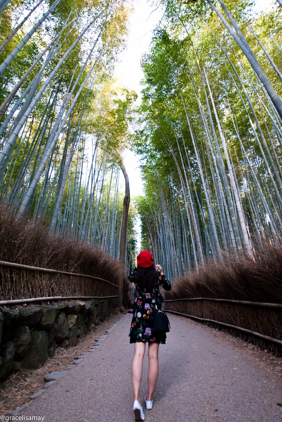 Japan: Bamboo Forest in Kyoto