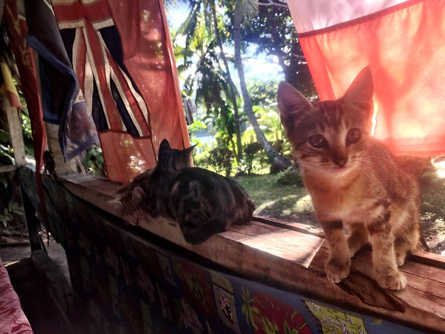Kittens. Port Resolution Yacht Club.