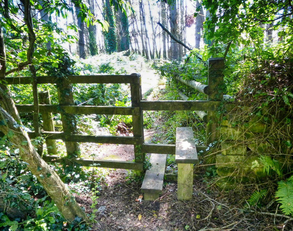 A two-step stile in a Cornish forest. Credit Dennis White