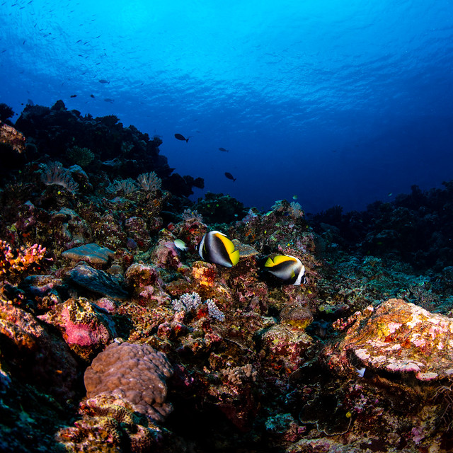 angel fish and soft corals (1 of 1)