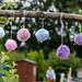 Scotland's Gardens Craigintinney Telferton July 2018 -49